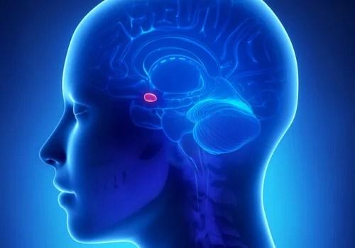 Amígdala simbolizando cuando ocurre a nuestro cerebro cuando nos enfadamos