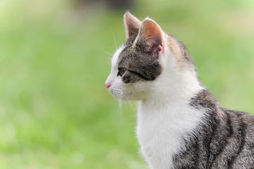 Gato de perfil