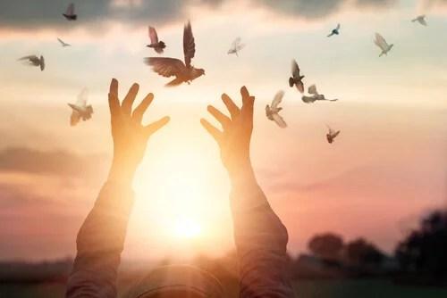 Pájaros alrededor de manos