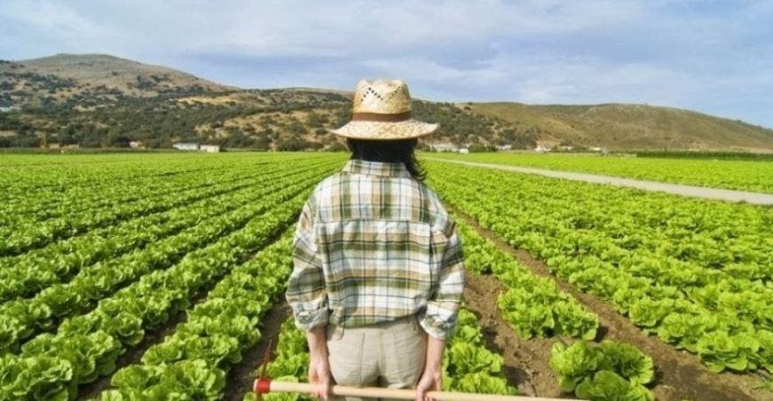 Vazapp, vai a zappare: il format che dà voce agli agricoltori pugliesi