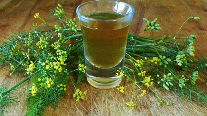 Finocchietto o finocchio selvatico, caratteristiche e utilizzi: il liquore made in Puglia