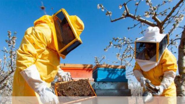 Transumanza delle api: dall'Abruzzo verso i fiori della Puglia