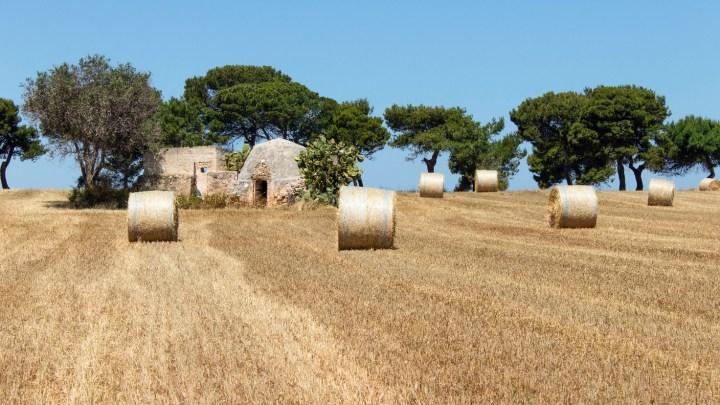 I campi delle Casedde di costa Ripagnola: qui, dove il tempo si è fermato