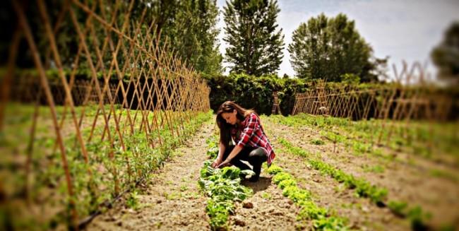 Bonus Donne in Campo: la Regione Puglia a sostegno delle aziende agricole rosa