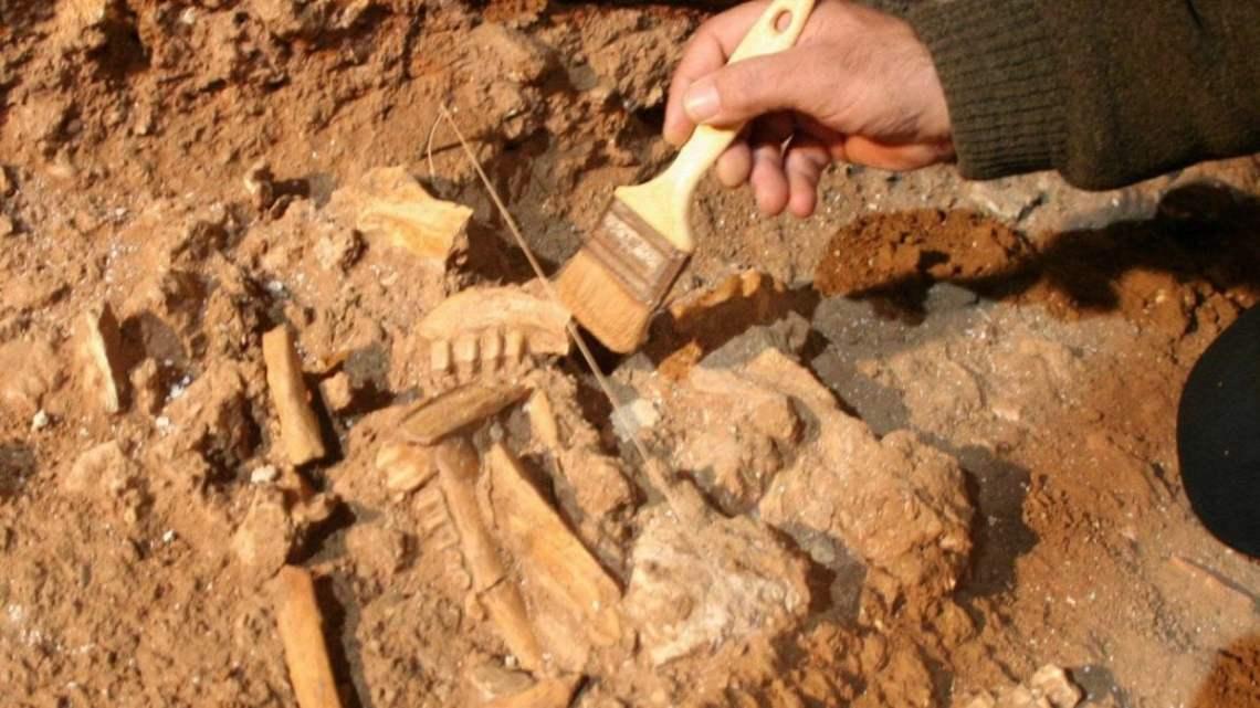 Risale a 32 mila anni fa la farina più antica del mondo: è stata scoperta in Puglia