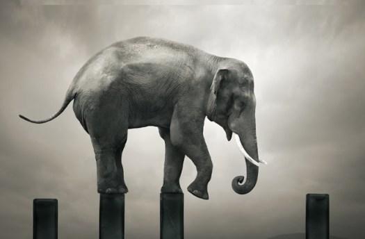 elefante-step1a