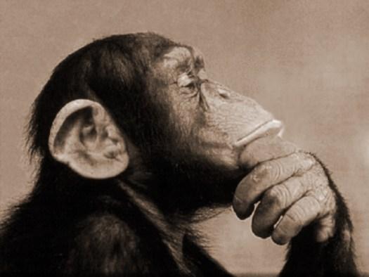 scimpanze-dubbioso