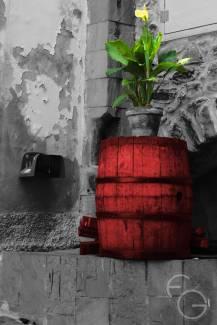 Natura morta con pianta viva - Photo: F. Giannotti