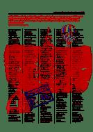Cupola di Pippo - Topo/grafica 01 - Graphics: Francesco Giannotti