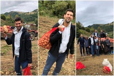Djokovic: un N° 1 que recolecta papas en un pequeño pueblo de Serbia