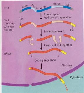 Microbiology101506