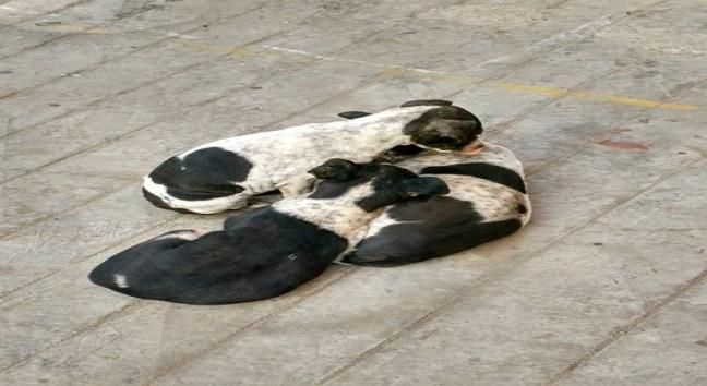 Cutest puppies in Kolkata