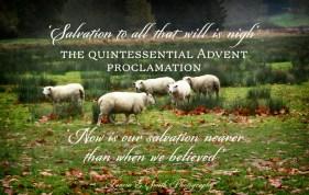 Burford sheep in November