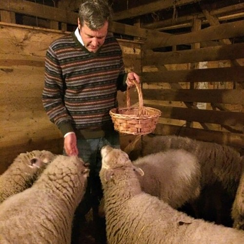 Philip giving sheep their Christmas apples! from Seeds of Love