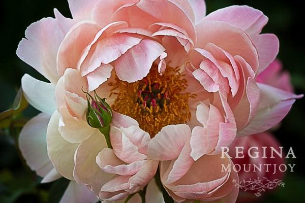 Emma Woodhouse - Image (c) Regina Mountjoy