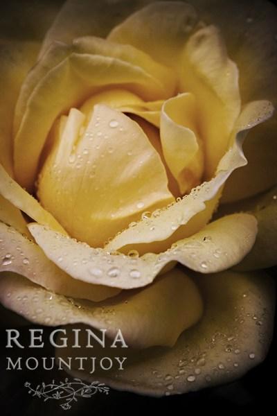 Invitation - Image (c) Regina Mountjoy