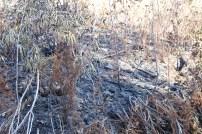 Fire scavenged landsides.