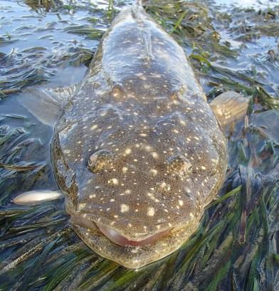 Big fish - small lure