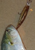 DUO Realis Shad 59MR tailor