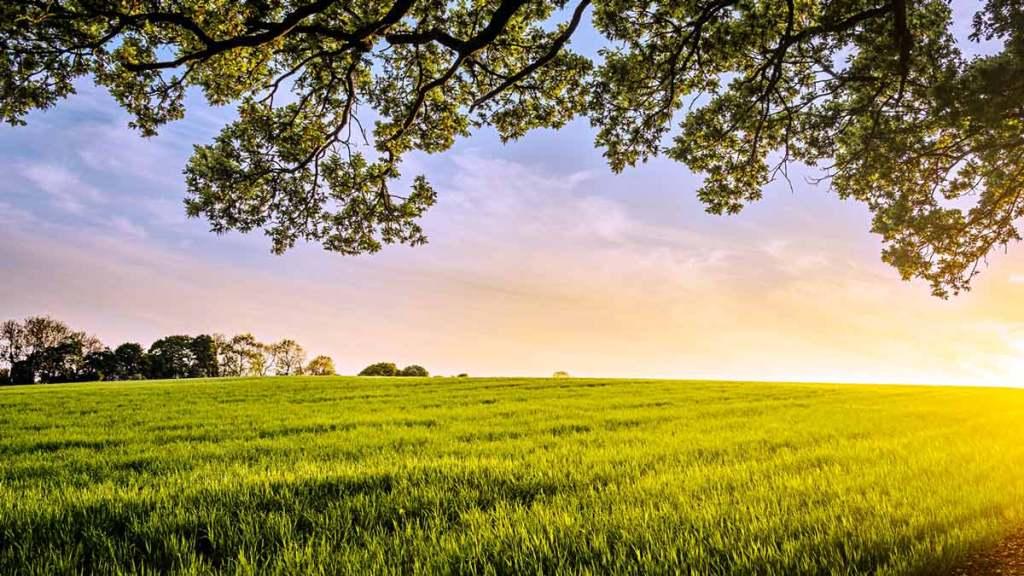 Ein weites Feld -Landleben und Landarche pur