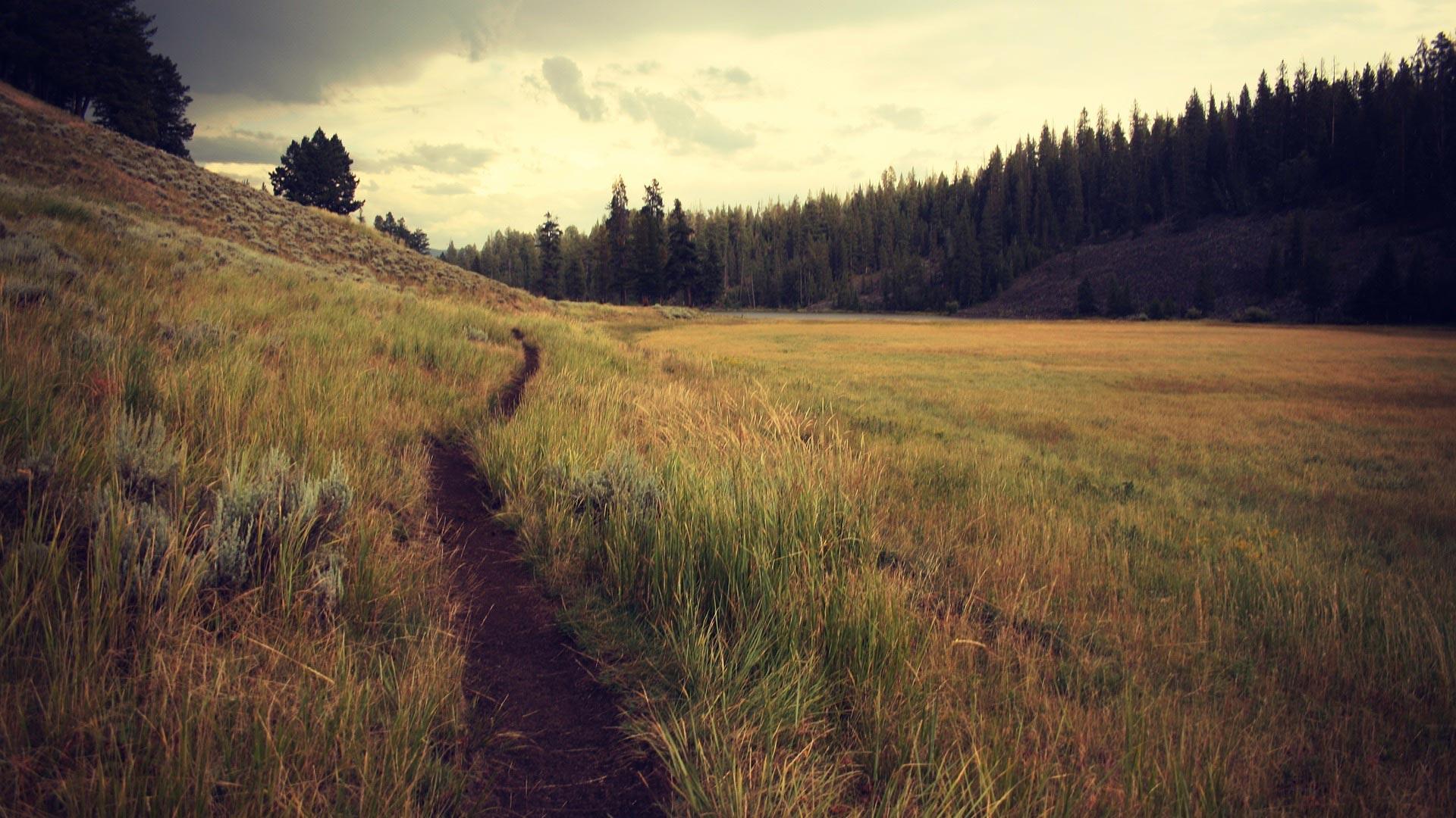 grass-trail