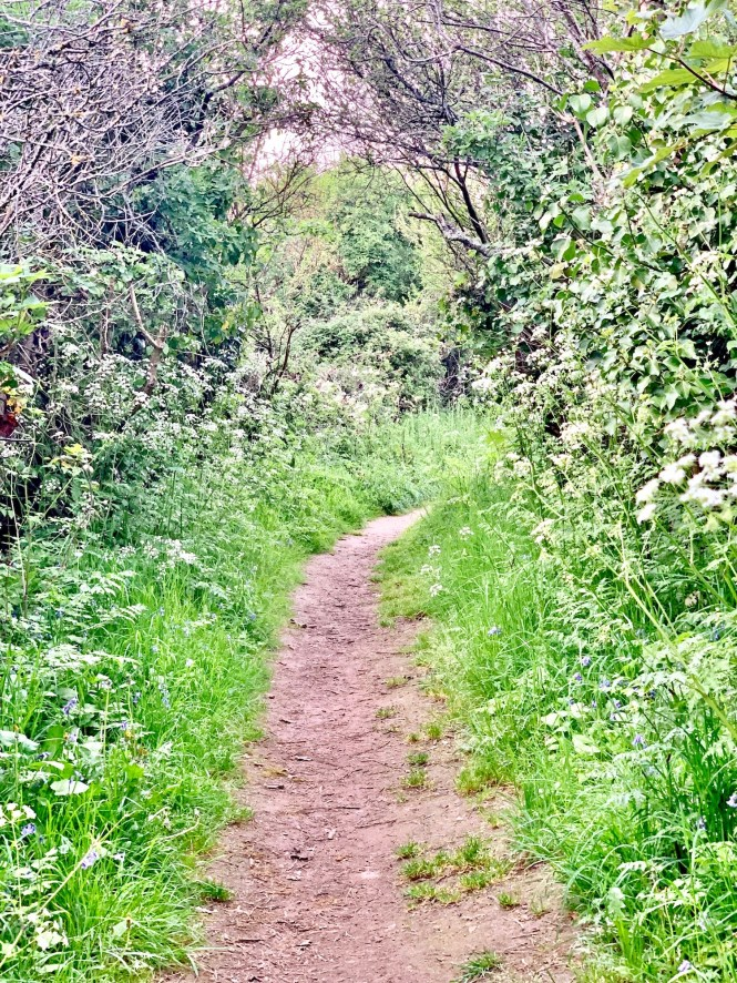 Carolles Normandy Garden