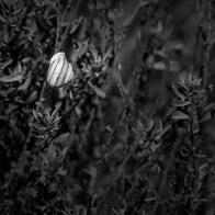 365 Project 006 / 6 Oct 2014 / snailshell