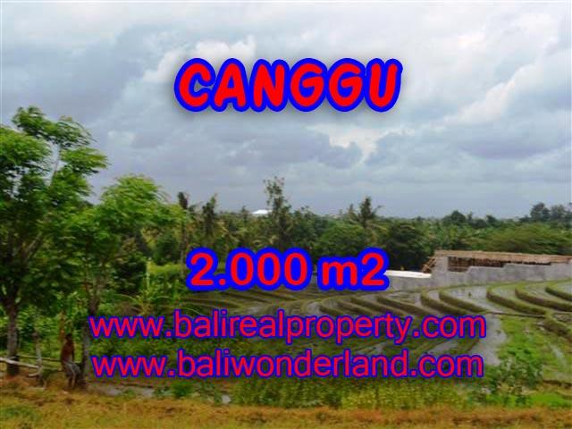 Beautiful Land for sale in Bali, green lush and paddy view in Canggu Bali – TJCG133