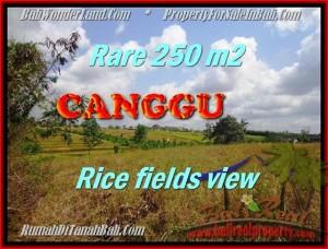 Beautiful CANGGU 250 m2 LAND FOR SALE TJCG164