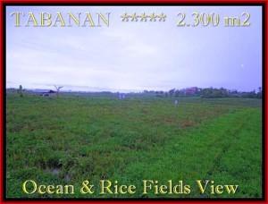 Affordable PROPERTY 2.300 m2 LAND SALE IN TABANAN BALI TJTB184
