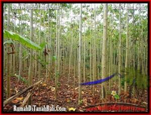 Beautiful PROPERTY 3,000 m2 LAND IN Tabanan Selemadeg FOR SALE TJTB159
