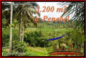 FOR SALE Beautiful PROPERTY 3,200 m2 LAND IN Tabanan Jatiluwih TJTB216