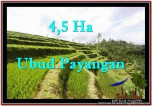 Exotic 45,000 m2 LAND IN UBUD BALI FOR SALE TJUB533