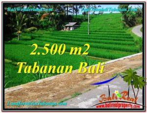 Magnificent 2,500 m2 LAND IN TABANAN BALI FOR SALE TJTB305