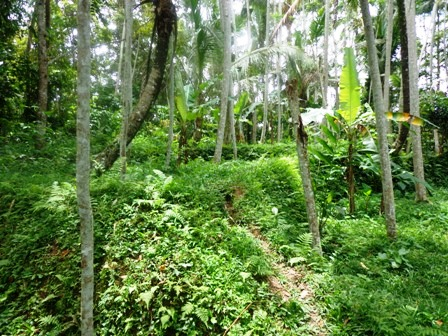 Land for sale in Ubud Bali 5,000 m2 with Tropical jungle view
