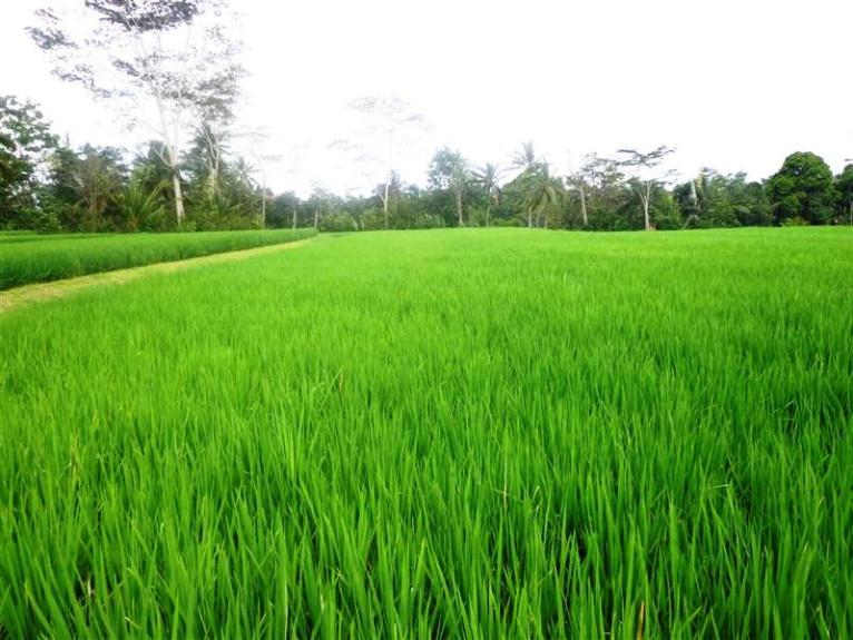 Land for sale in Ubud Bali 3,100 sqm in Ubud Tegalalang