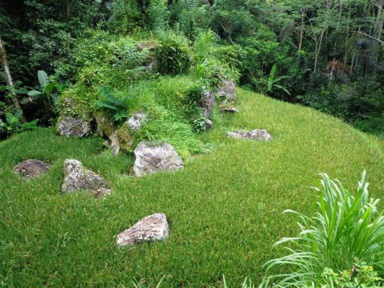 Land for sale in Ubud Bali 2.000 m2 in Ubud Tegalalang