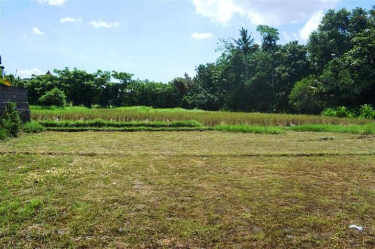 Land for sale in Canggu Bali 8.85 Ares in Canggu Pererenan