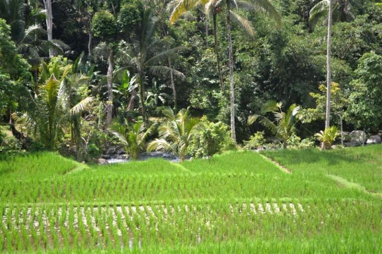 Tabanan Land sale 30 Ares with river view