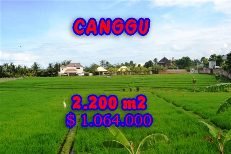 Outstanding Property for sale in Bali, land for sale in Canggu Bali  – 2.200 sqm @ $ 483