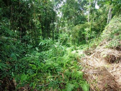 Ubud land for sale in Bali