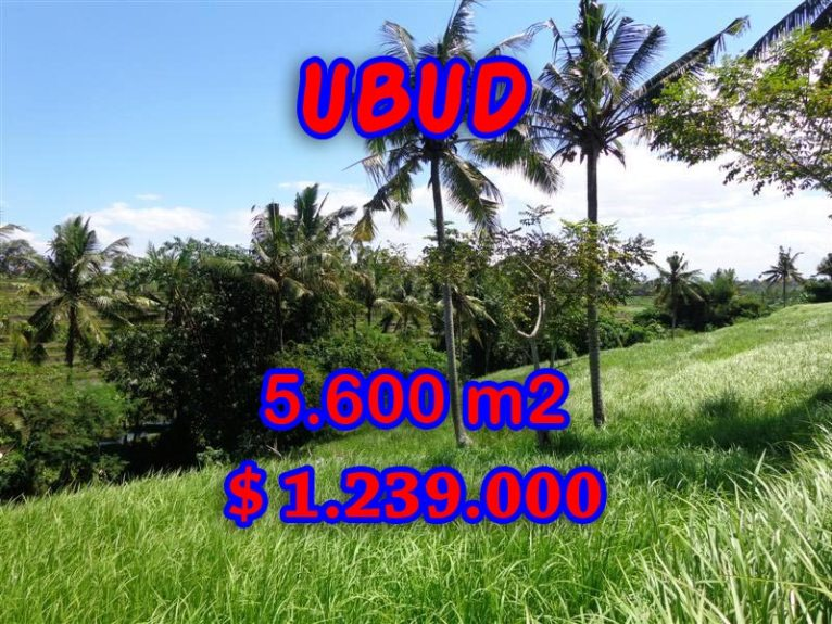 Land for sale in Bali, Fantastic view in Ubud Center – TJUB299