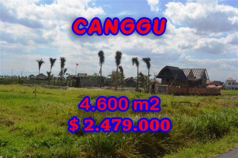 Land in Bali for sale, extraordinary view in Canggu pererenan – TJCG117
