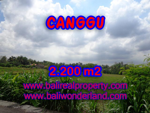 Outstanding Property for sale in Bali, land for sale in Canggu Bali  – 2.200 sqm @ $ 283