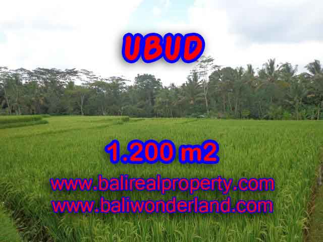 Beautiful Land for sale in Bali, ricefields and mountain view in Ubud Bali – TJUB400
