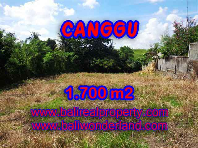 Land for sale in Bali, amazing view in Canggu Pererenan – TJCG143