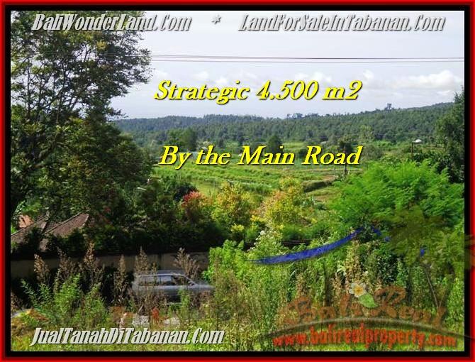 Exotic PROPERTY 4,500 m2 LAND SALE IN TABANAN BALI TJTB193
