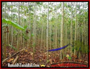 Magnificent PROPERTY 3,000 m2 LAND FOR SALE IN Tabanan Selemadeg TJTB159