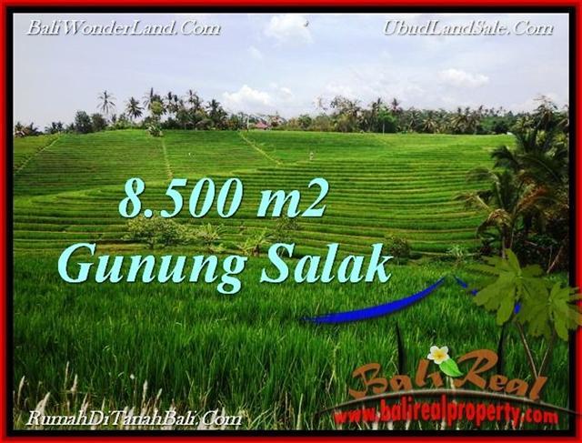Exotic PROPERTY LAND IN TABANAN FOR SALE TJTB223