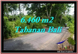 Beautiful PROPERTY 6,460 m2 LAND IN Tabanan Selemadeg FOR SALE TJTB256